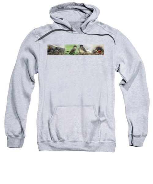 Eastern Phoebe Family Sweatshirt
