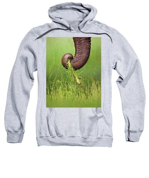 Elephant Trunk Pulling Grass Sweatshirt