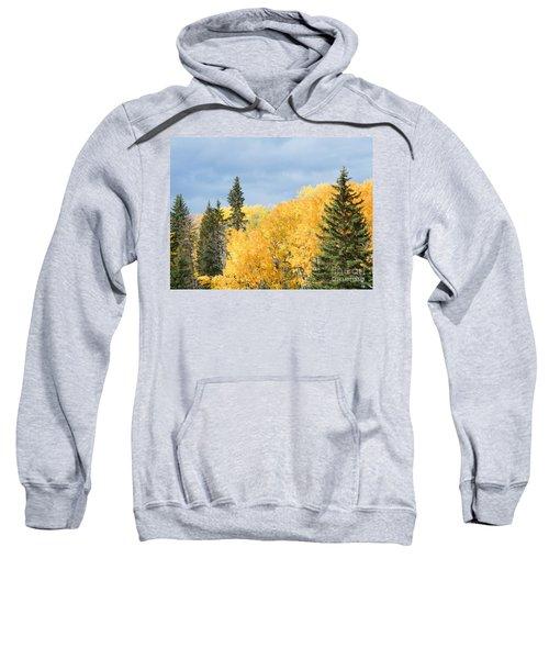 Fall Near Ya Ha Tinda Sweatshirt