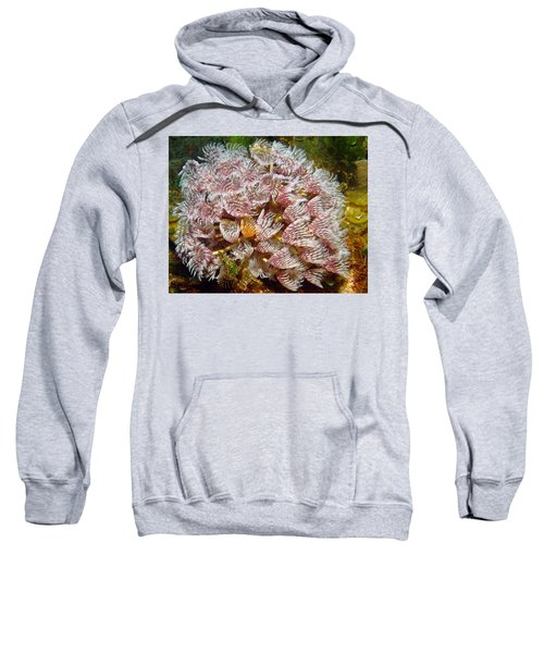 Featherduster With An Attitude  Sweatshirt