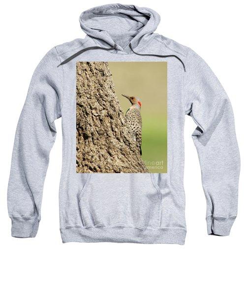 Flicker On Tree Trunk Sweatshirt
