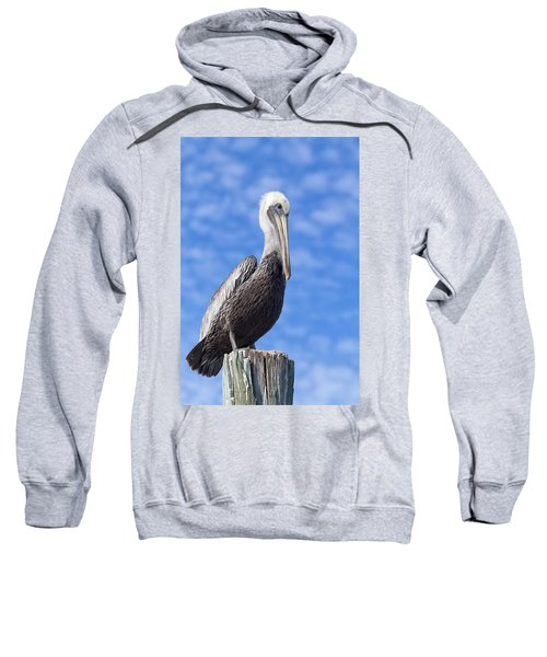Florida Brown Pelican Sweatshirt