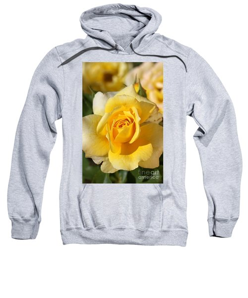 Flower-yellow Rose-delight Sweatshirt