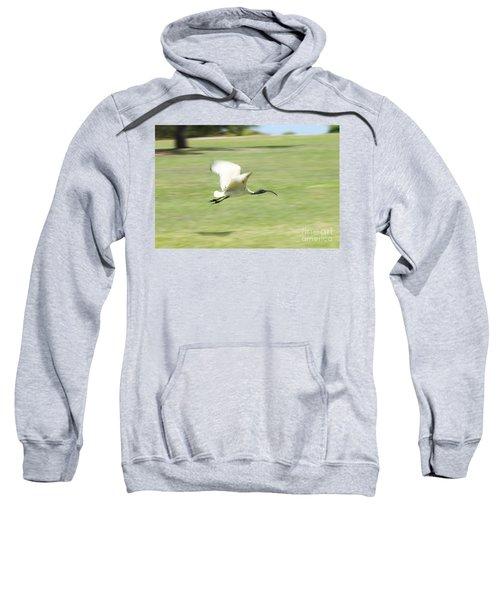 Flying Ibis Sweatshirt