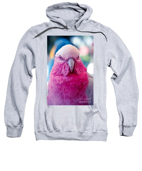 Galah - Eolophus Roseicapilla - Pink And Grey - Roseate Cockatoo Maui Hawaii Sweatshirt by Sharon Mau