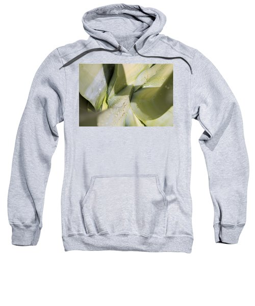 Giant Agave Abstract 3 Sweatshirt