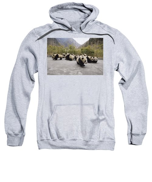 Giant Panda Cubs Wolong China Sweatshirt