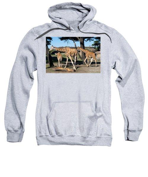 Giraffe Dsc2859 Sweatshirt