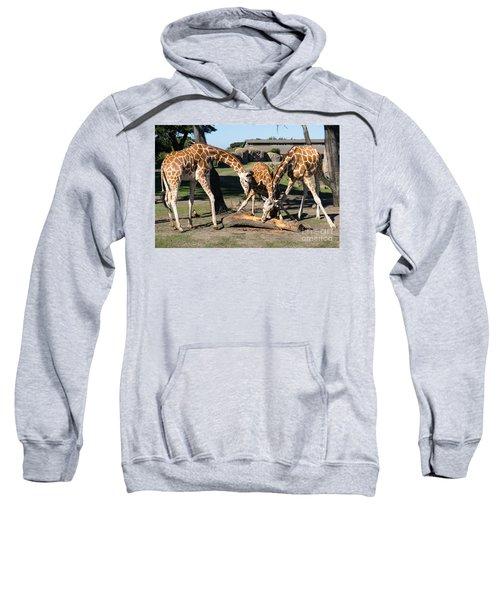 Giraffe Dsc2870 Sweatshirt