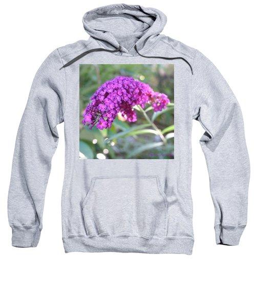 Good Morning Purple Butterfly Bush Sweatshirt