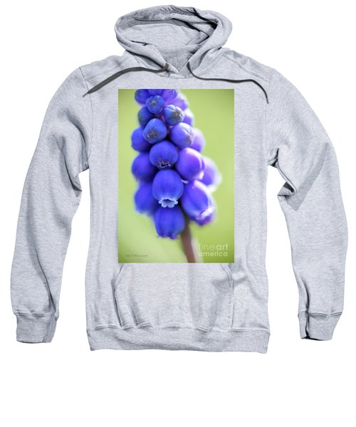 Grape Hyacinth Sweatshirt