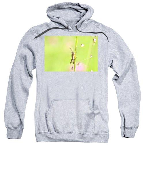Grasshopper  Sweatshirt by Tommytechno Sweden
