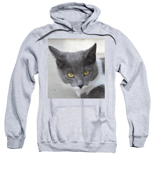 Gray Cat - Listening Sweatshirt
