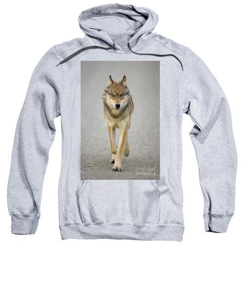 Gray Wolf Denali National Park Alaska Sweatshirt
