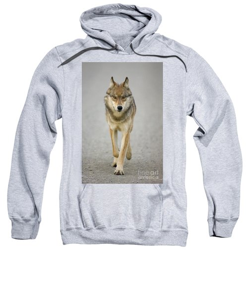 Gray Wolf Denali National Park Alaska Sweatshirt