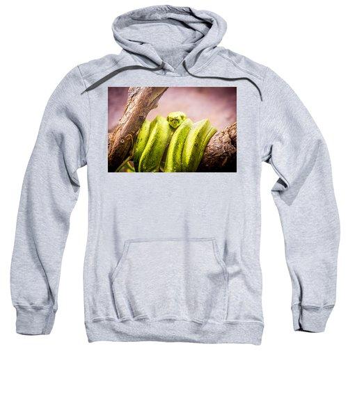 Green Tree Python Sweatshirt
