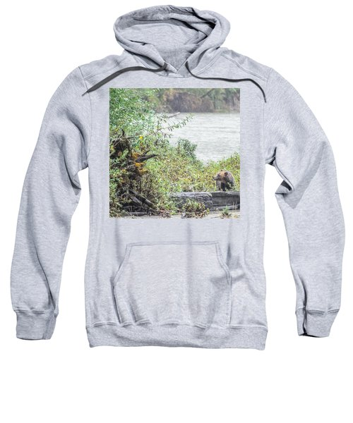 Grizzly Bear Late September 2 Sweatshirt