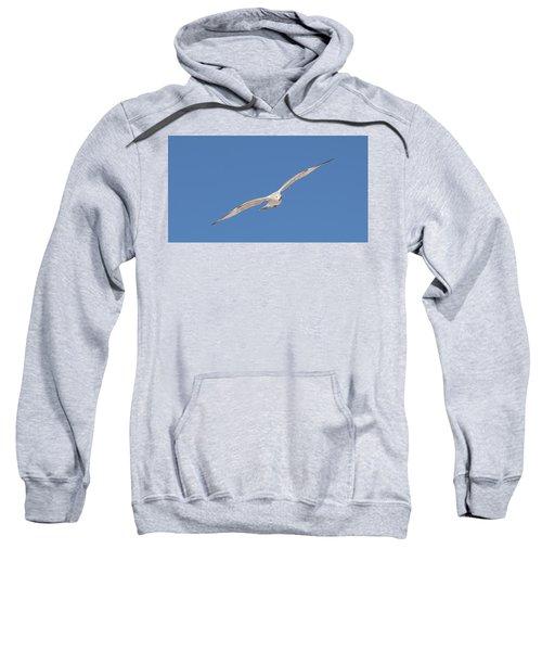 Gull In Flight - 2 Sweatshirt