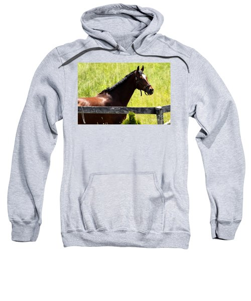 Handsom Horse Sweatshirt