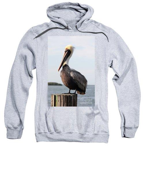 Handsome Brown Pelican Sweatshirt
