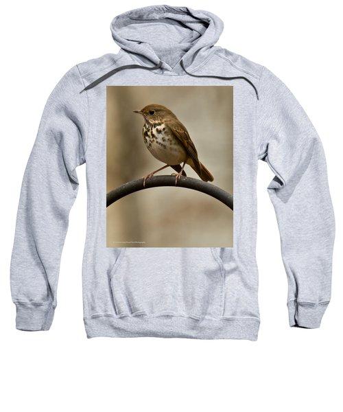 Hermit Thrush Sweatshirt