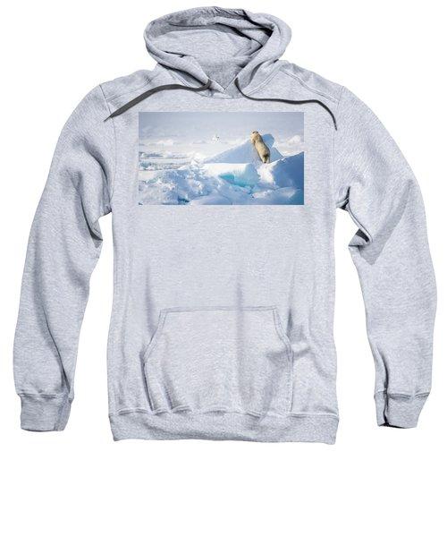 Hide And Seek, Ursus Maritimes, Fulmars Sweatshirt