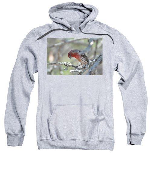 House Finch Sweatshirt