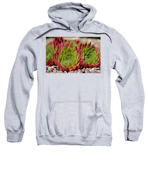 Houseleeks Aka Sempervivum From The Side Sweatshirt
