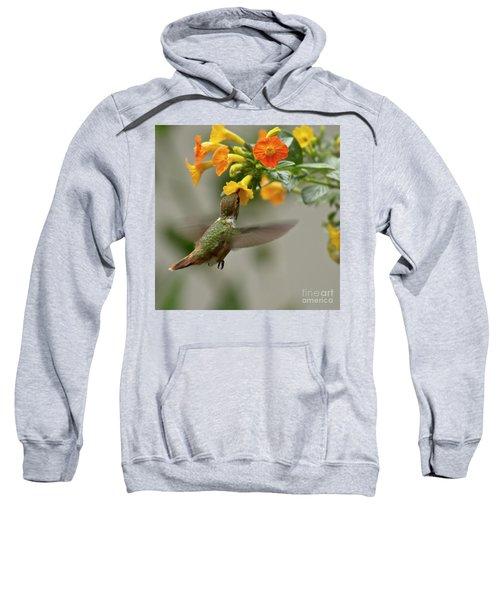 Hummingbird Sips Nectar Sweatshirt