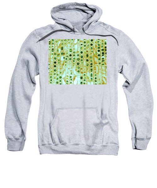 Hyacinth Root Tip Cells Sweatshirt