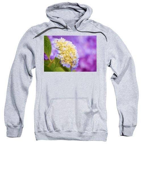 Hydrangea On Purple Sweatshirt
