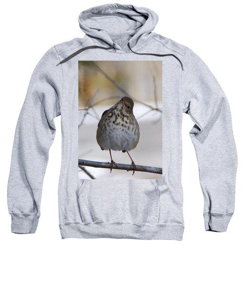 Inquisitive Hermit Thrush Sweatshirt