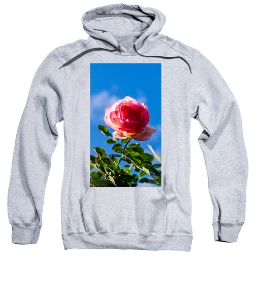 iPhone Case - Pink Rose Sweatshirt