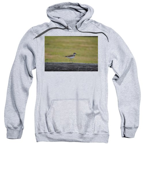 Killdeer Sweatshirt by James Petersen