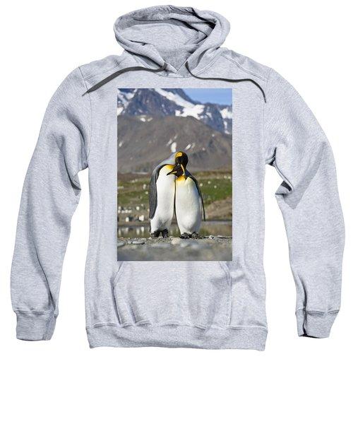 King Penguins Courting St Andrews Bay Sweatshirt