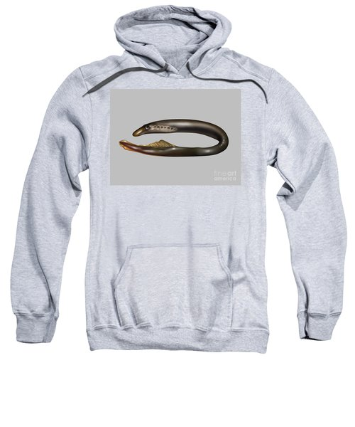 Lamprey Eel, Illustration Sweatshirt