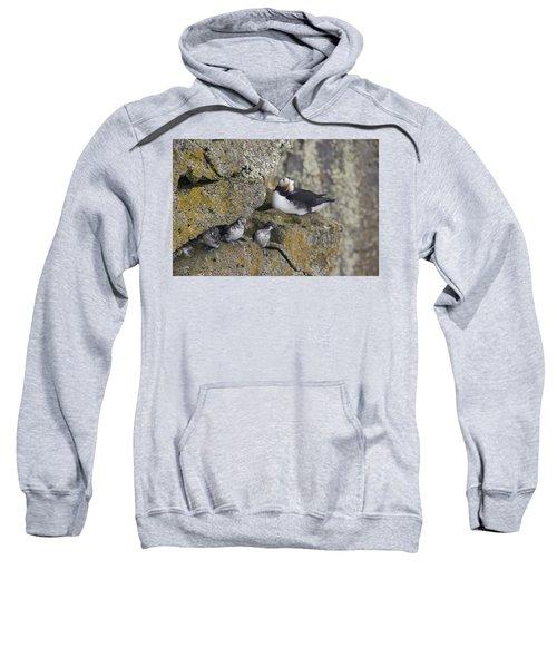 Least Auklets Perched On A Narrow Ledge Sweatshirt by Milo Burcham