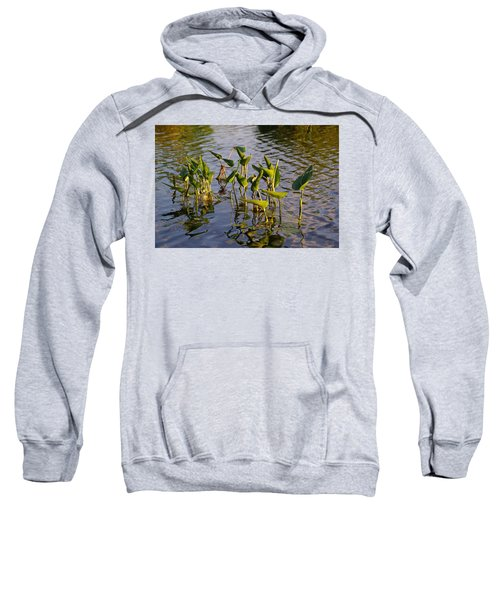 Lillies In Evening Glory Sweatshirt