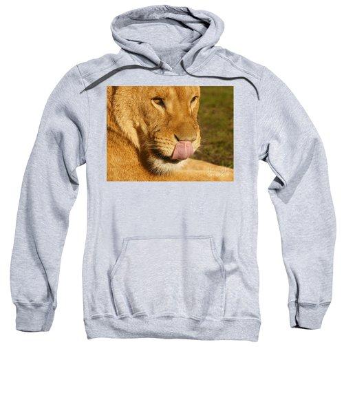 Lion Licking Her Nose Sweatshirt