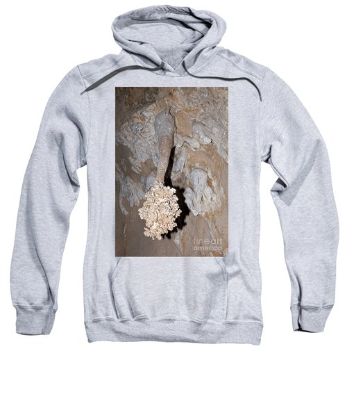 Lions Tail Carlsbad Caverns National Park Sweatshirt