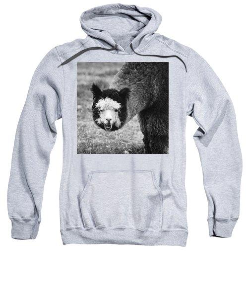 Sweatshirt featuring the photograph Llama by Yulia Kazansky