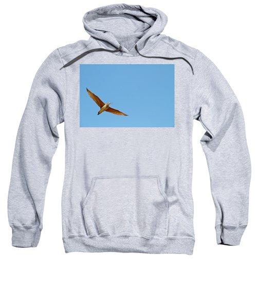 Long-billed Curlew In Flight Sweatshirt