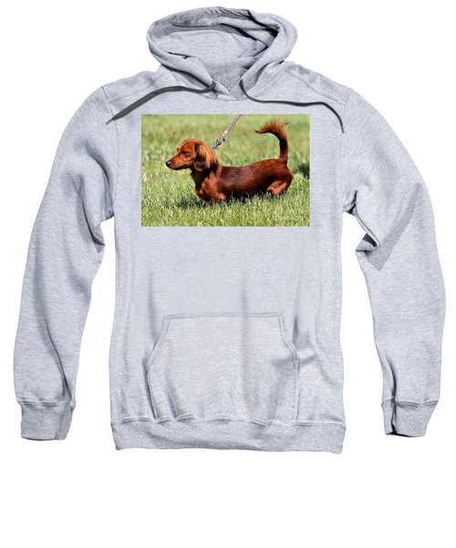 Long Haired Dachshund Sweatshirt
