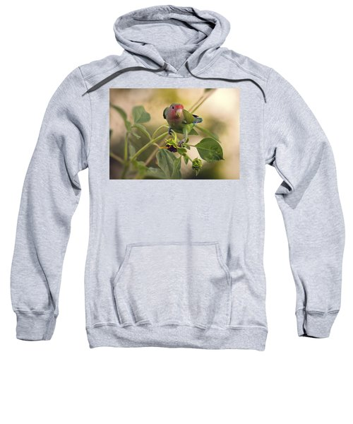 Lovebird On  Sunflower Branch  Sweatshirt by Saija  Lehtonen