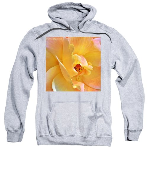 Lovely Yellow And Peach Rose Sweatshirt