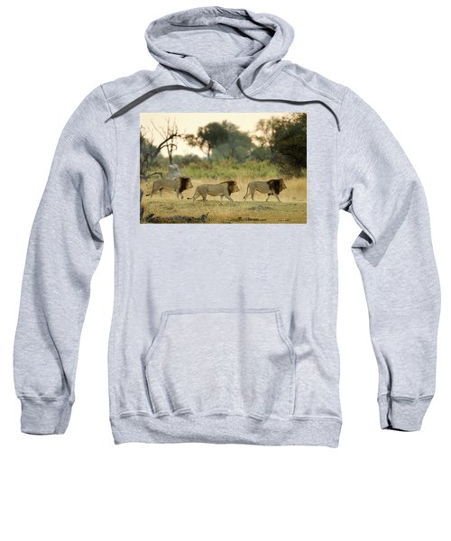 Male Lions At Dawn, Moremi Game Sweatshirt