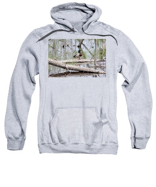 Mallard Duck On Log Sweatshirt