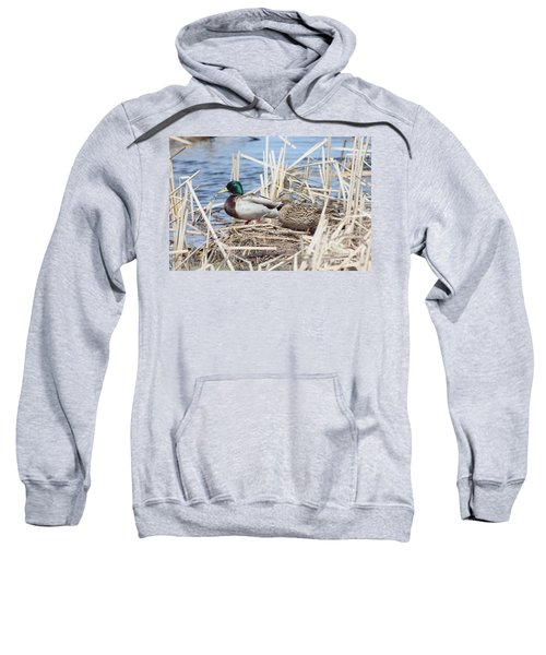 Mallard Ducks Sweatshirt