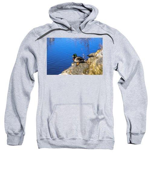 Mallard Looking Over His Domain Sweatshirt