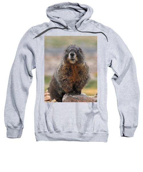 Sweatshirt featuring the photograph Marmot by Mae Wertz